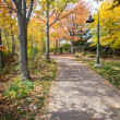 Road in a park — Stock Photo