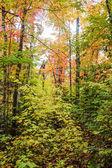 Algonquin National Park in autumn — Stock Photo