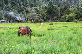 Horses and cowes in grass field — Foto Stock