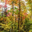 Algonquin National Park in autumn — Stock Photo
