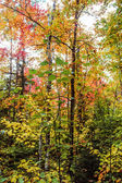 Algonquin National Park in autumn — Stockfoto