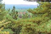 Algonquin National Park during autumn — Stock Photo