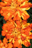 Details of flowers shapes and texture — Foto de Stock