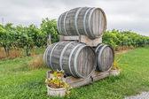 Botti per vino in un campo d'uva — Foto Stock