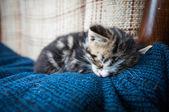Sleepy baby cat on couch — Stock Photo