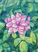 Watercolor Clematis Flowers — Stock Photo