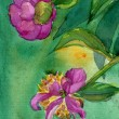 Watercolor Peony Flowers — ストック写真