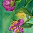 Watercolor Peony Flowers — Stok fotoğraf