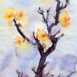 Watercolor Yellow Apricot Flowers — Stock Photo