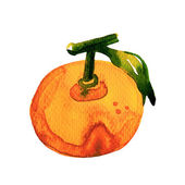 Watercolor Tangerine on White Background — Stock fotografie