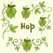 Stock Vector: Stylized hops set