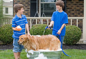 Boys Giving Dog a Bath — Stock Photo