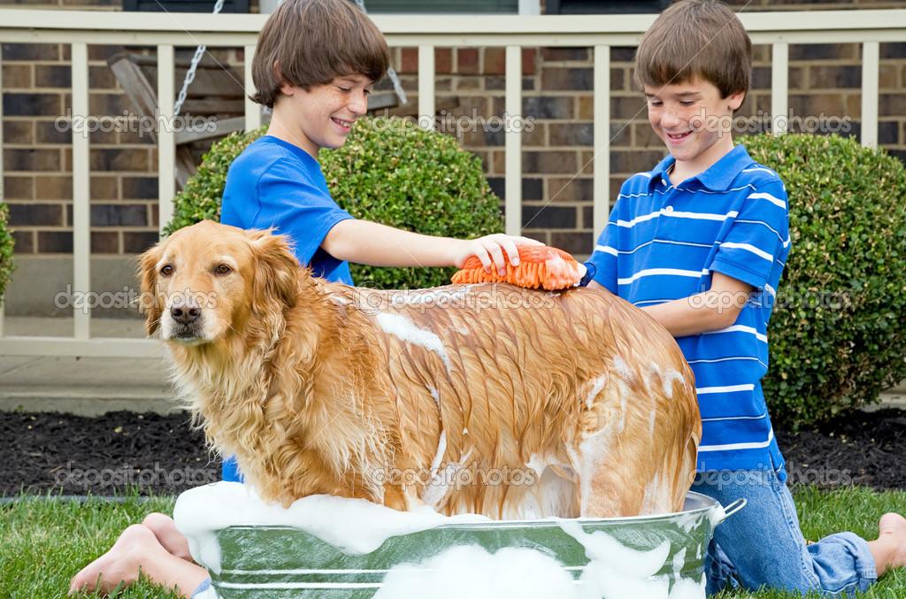 Boys Giving Dog A Bath Stock Photo Sonyae 34264873
