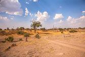 Landscape of Botswana, South Africa — Stock Photo