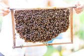 Bees on honey cells, Vietnam — Stock Photo