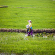 Rice planting, Vietnam — Stock Photo
