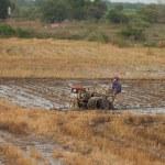 Vietnam 10 of December 2013. Vietnamese farme rides a tractor — Stock Photo