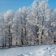 Winter trees landscape — Stock Photo