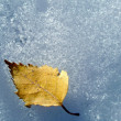 Autumn leaf on snow — Stock Photo