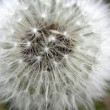 Fluffy dandelion — Stock Photo #32575803