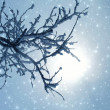 Winter fantasy with branches in snow — Stock Photo