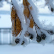 Tree in snow — Stock Photo