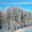 Winter landscape — Foto Stock