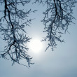 Branches with snow — Stock Photo #32576167