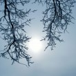 Branches with snow — Stock Photo