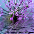 Flower in water — Stockfoto