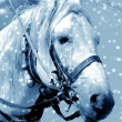Horse in snow — Stock Photo