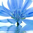 Blue flower reflected in water — Stockfoto