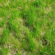 Green grass — Stock Photo #32577543