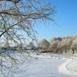 Winter trees — Stock Photo
