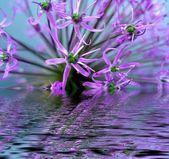 Blume im wasser — Stockfoto