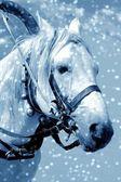 Paard in sneeuw — Stockfoto