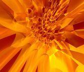 Ognisty kwiat — Zdjęcie stockowe