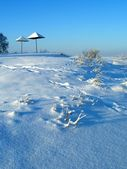 Winter plants — Stockfoto