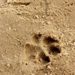 Trace on sand — Stock Photo #32636753