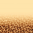Leopard fur background — Stock Photo