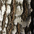 Birch bark — Stock Photo #32636941