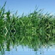 Grass and lake — Stock Photo
