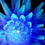 Blue flower — Stock Photo #32637341