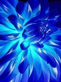 Blaue blume — Stockfoto