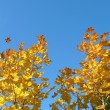 Yellow trees — Stock Photo
