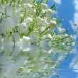 Lily of the valley in water — Stock Photo
