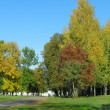 Autumn trees — Stock Photo #32789137