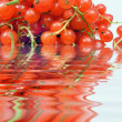 Stock Photo: Red currants in water