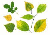 Diverse foglie di autunno — Foto Stock