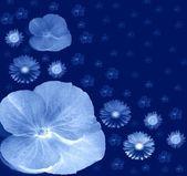 Night Flowers — Stock Photo